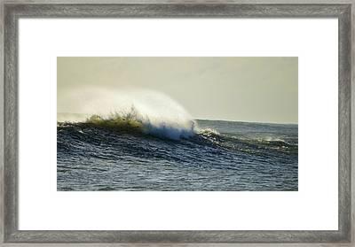 Surffish Framed Print by Lynda Dawson-Youngclaus
