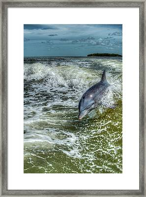 Surfing Dolphin Framed Print by Nick  Shirghio