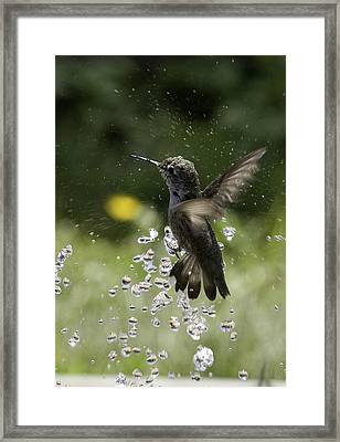 Surfing The Drops Of Water Framed Print