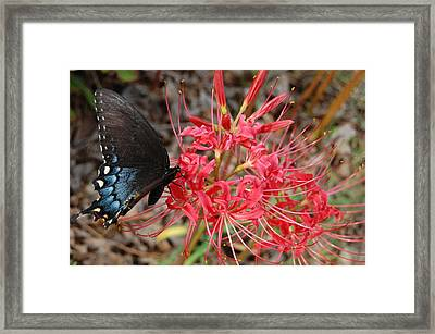 Surprise Lily Framed Print by Beverly Hammond