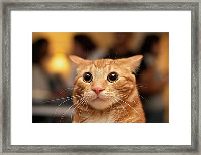 Surprised Cat Framed Print by Eric Hacke