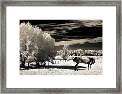 Surreal Fantasy Horse Landscape Framed Print by Kathy Fornal