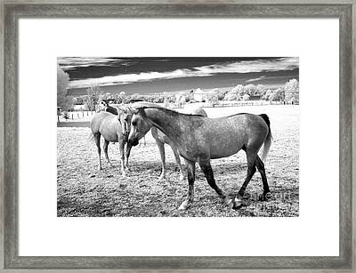 Surreal Infrared Black White Horses Landscape Framed Print by Kathy Fornal