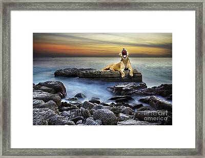 Surreal Lioness Framed Print by Carlos Caetano