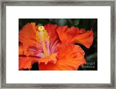 Surrender Framed Print by Sharon Mau