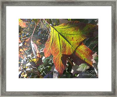 Surrender Framed Print by Trish Hale