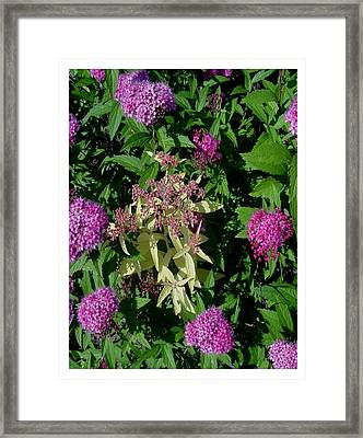 Framed Print featuring the photograph Surrounded by Frank Wickham