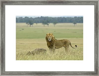 Surveying His Kingdom Framed Print by Michele Burgess