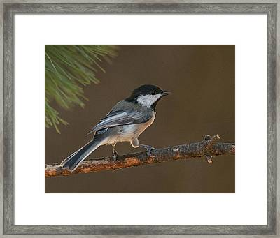 Surveying The Forest Framed Print by Don Wolf