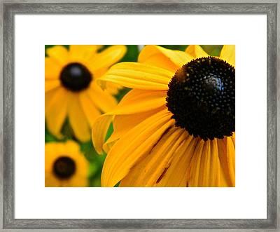 Susan's Black Eye Framed Print by Randy Rosenberger
