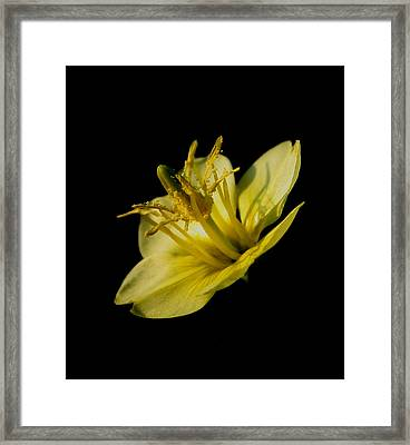Suspended Framed Print by Karen Harrison