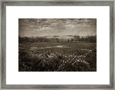 Suspended Over The Wetlands Framed Print by Dale Kincaid
