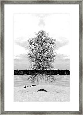Suspended Tree Framed Print