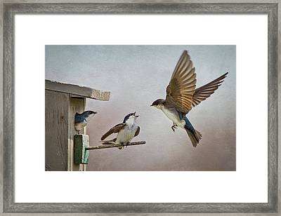 Swallows At Birdhouse Framed Print by Betty Wiley