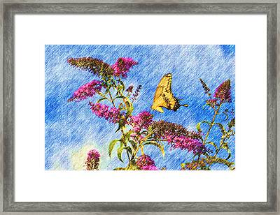 Swallowtail And Butterfly Bush Framed Print by Heidi Smith