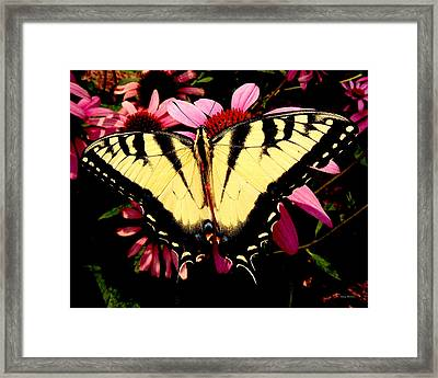 Framed Print featuring the photograph Swallowtail Butterfly On A Purple Coneflower by George Bostian