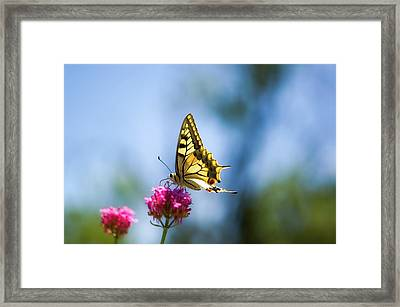 Swallowtail Butterfly On Pink Flower Framed Print by Alexandre Fundone