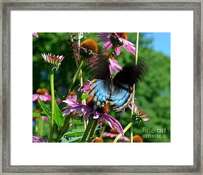 Swallowtail In Motion Framed Print