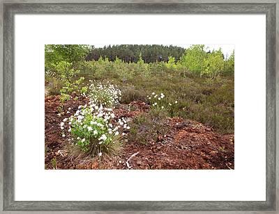 swamp Dzelmes Framed Print