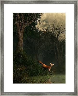 Swamp Fox Framed Print by Daniel Eskridge