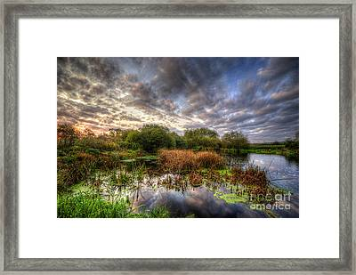 Swampy Framed Print