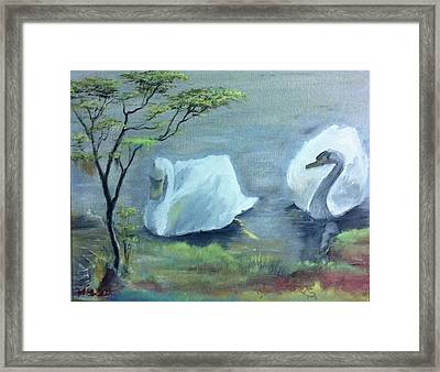 Swan Couple Framed Print by M Bhatt