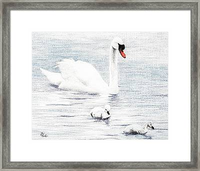 Framed Print featuring the drawing Swan Family by Brent Ander