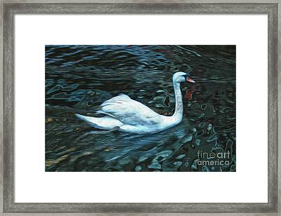 Swan Framed Print by Gregory Dyer