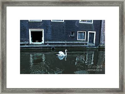 Swan In Amsterdam Canal Framed Print by Gregory Dyer