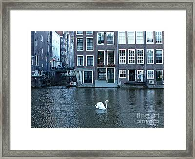 Swan In Amsterdam Framed Print by Gregory Dyer