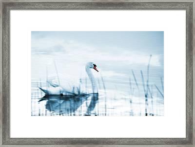 Swan Framed Print by Jaroslaw Grudzinski