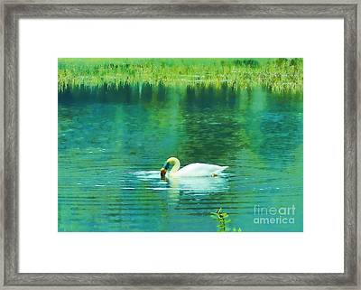 Swan Lake Framed Print by Judi Bagwell