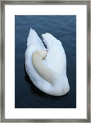 Swan Framed Print by Luis Esteves