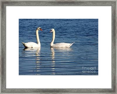 Swan Mates Framed Print