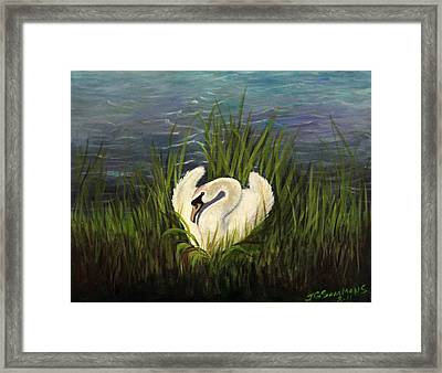 Swan Nesting Framed Print by Janet Greer Sammons
