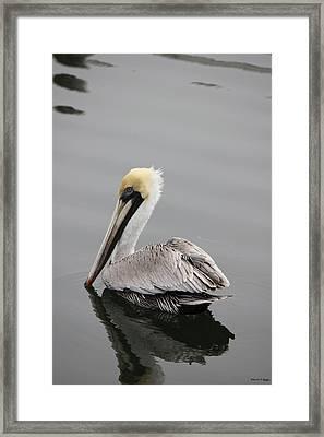 Swan Of The Gulf Coast Framed Print by Deborah Hughes