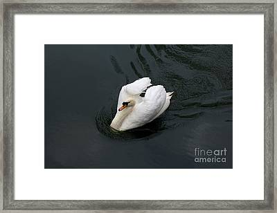 Framed Print featuring the photograph Swan On Black Water by Les Palenik
