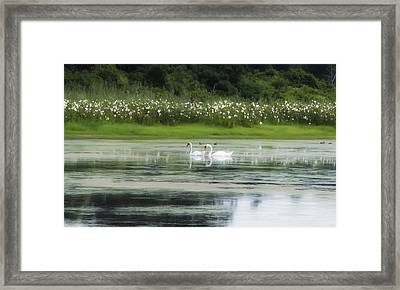 Swan Pond Framed Print by Bill Cannon
