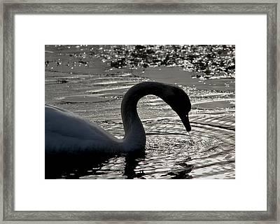 Swan Silhouette Framed Print