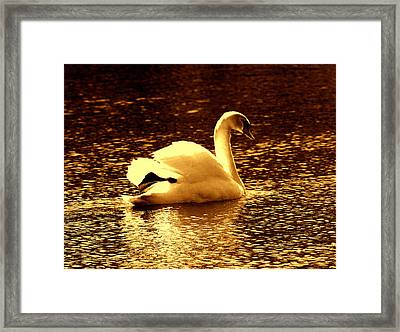 Swan Song 3 Framed Print by Aron Chervin