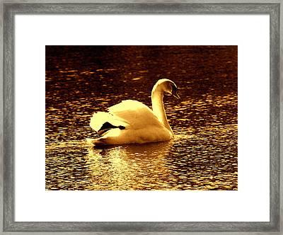 Swan Song 3 Framed Print