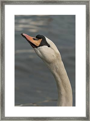 Swan Framed Print by Design Windmill