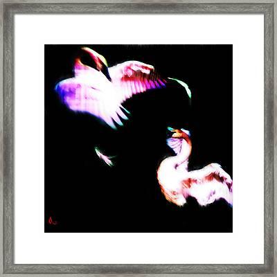 Swans Framed Print by Adam Vance