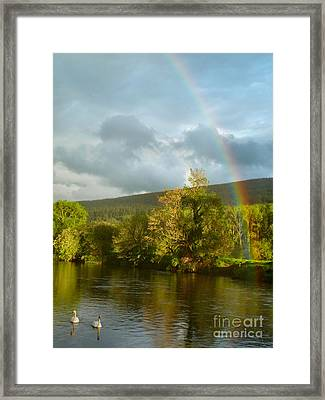 Swans And Double Rainbow 2 Framed Print by Debra Collins