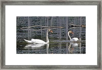 Swans At Sandy Ridge Framed Print by Bob Niederriter