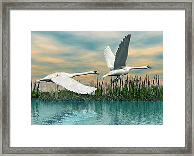 Swans In Flight Framed Print