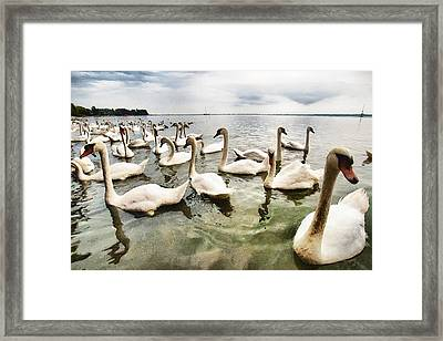 Framed Print featuring the photograph Swans by Okan YILMAZ