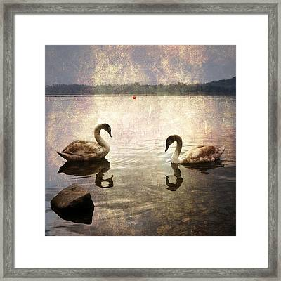 swans on Lake Varese in Italy Framed Print by Joana Kruse