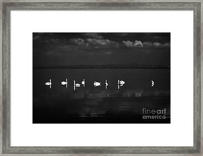 Swans Swimming On Still Lough Neagh County Antrim Northern Ireland Framed Print by Joe Fox