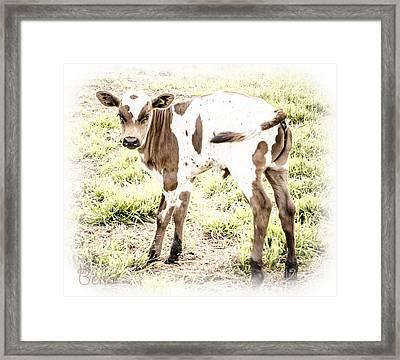 Sweet Baby Lou Framed Print by Christine Belt